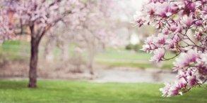 Kampf der Fruehjahrsmuedigkeit - Tipps fuer einen reibungslosen Uebergang